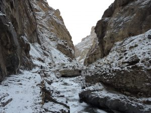 Snow Leopard| Ladakh Winter| Birding | Wildlife| Above 14000ft