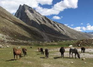 Miyar Valley | Lahaul | Himachal Pradesh | Above 14000ft
